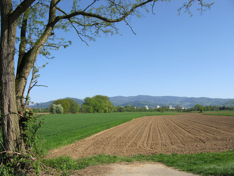 Photo of site of the proposed new Dietenbach neighbourhood by Andreas Schwarzkopf