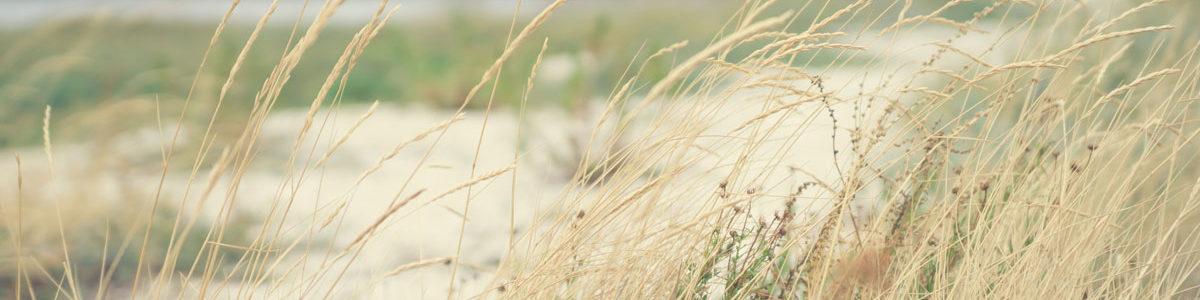 Dunes Photo by Martin Dörsch on Unsplash
