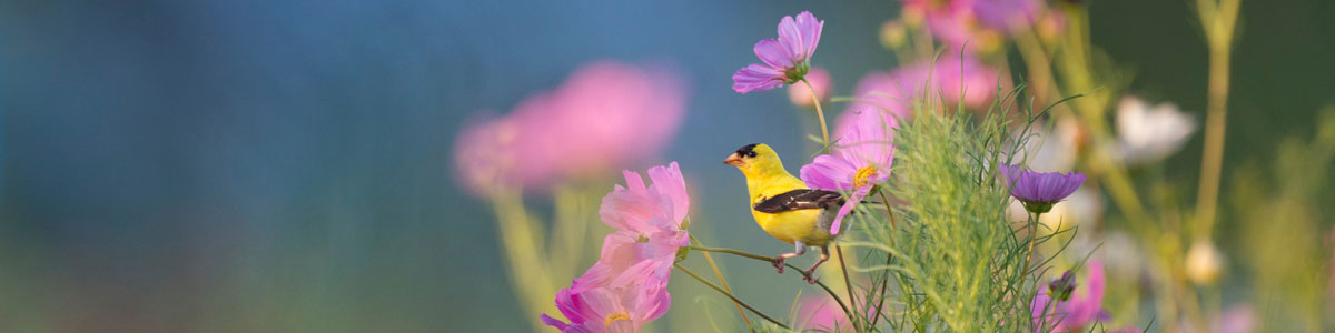 Bird and flowers, Photo by Ray Hennessy on Unsplash