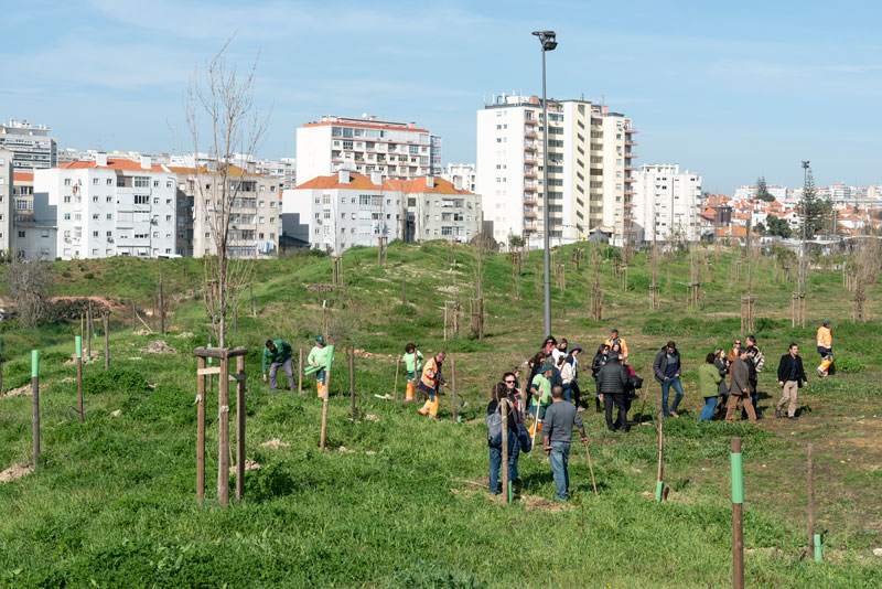 Greenspace at the heart of an urban setting – adaptation and mitigation together